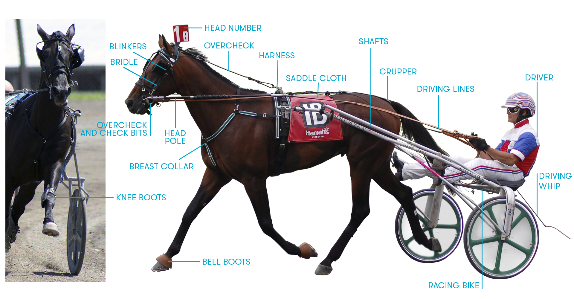 Image left shows Knee Boots. Image right shows horse facing left with Brindle, Overcheck and Check Bits, Blinkers, Head Number, Head Pole, Breast Collar, Bell Boats, Overcheck, Harness, Saddle Cloth, Shafts, Crupper, Driving Lines, Racing Bike, Driver, Driving Whip